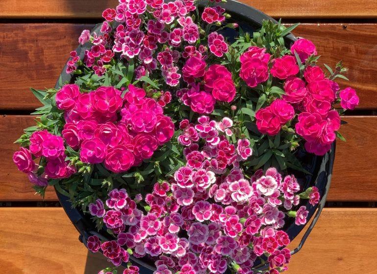 2019 07 09 flowerpot 01